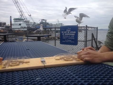 Dangerous Seagulls